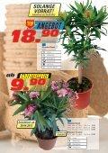 Mediterrane Pflanzen - Seite 4