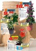 Mediterrane Pflanzen - Seite 7