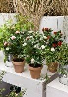 Plants & Pots II Euroflor - Page 5