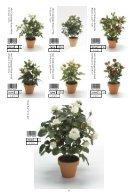 Plants & Pots II Euroflor - Page 6