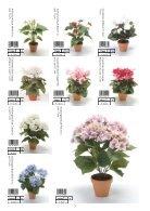 Plants & Pots II Euroflor - Page 7