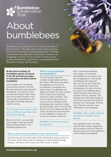 About bumblebees factsheet - Bumblebee Conservation Trust