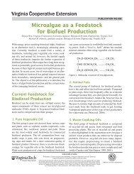 Microalgae as a Feedstock for Biofuel Production - Virginia ...