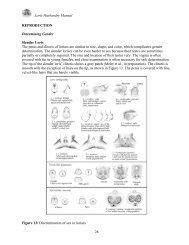 Loris Husbandry Manual REPRODUCTION Determining Gender ...
