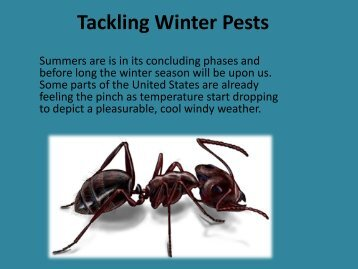 Tackling Winter Pests