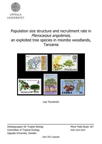 how population size rate of If n is the population size of diploid organisms, then the number of a alleles  n e (the size of an ideal population that experiences genetic drift at the rate of the.