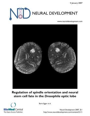 Regulation of spindle orientation and neural stem ... - BioMed Central