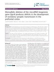 Monoallelic deletion of the microRNA biogenesis gene Dgcr8 ...