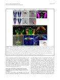 Provisional PDF - Neural Development - Page 5