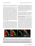 Neural Development - BioMed Central - Page 3
