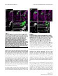 Neural Development - BioMed Central - Page 5