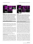 Neural Development - BioMed Central - Page 6