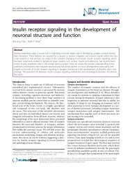 Insulin receptor signaling in the development of neuronal - Neural ...