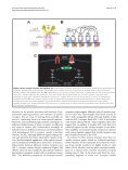 Insulin receptor signaling in the development of neuronal - Neural ... - Page 6
