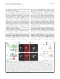 In vivo development of dendritic orientation in wild-type and ... - Page 3