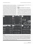 The abdomen of Drosophila - BioMed Central - Page 3