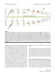 The abdomen of Drosophila - BioMed Central - Page 6