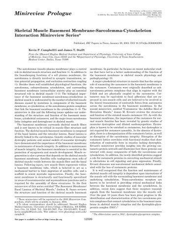Skeletal Muscle Basement Membrane-Sarcolemma-Cytoskeleton ...