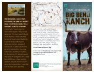 Texas Longhorns at Big Bend Ranch State Park