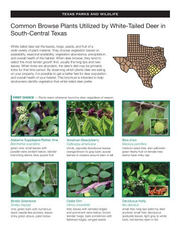 Common Browse Plants Utilized by White-Tailed Deer in South ...