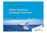 Whale Watching Campaign Overview Whale Watching Campaign ...