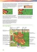 Die Täler von Yorkshire sind berühmt für ihre ... - Treefrog Games - Seite 4