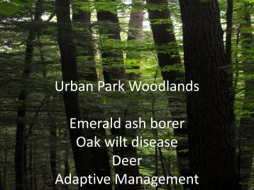 Urban Park Woodlands City of Pittsburgh - Pittsburgh Parks ...
