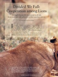 Divided We Fall: Cooperation among Lions - Trinity University