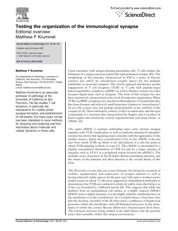 Testing the organization of the immunological synapse