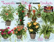 "10"" Porch Fern Patio Pot 12"" Fern Hanging Basket 12"" Geranium ..."