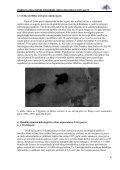 Pasākumu plāns dabiskā hidroloģiskā režīma atjaunošanai Teiču ... - Page 6