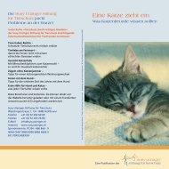 Eine Katze zieht ein - Susy Utzinger Stiftung für Tierschutz