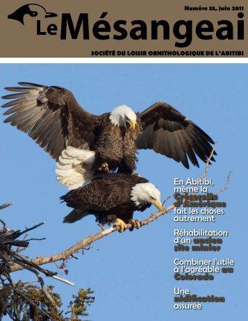 Crécerelle d'Amérique - La Société du loisir ornithologique de l ...