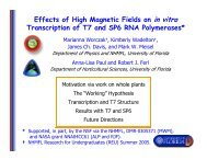 Effects of High Magnetic Fields on in vitro Transcription of T7 and ...