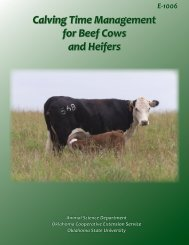 Calving Time Management for Beef Cows and Heifers - OSU Fact ...