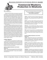 Commercial Blueberry Production in Oklahoma - OSU Fact Sheets ...