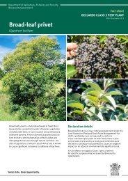 Broad-leaf privet fact sheet - Department of Primary Industries