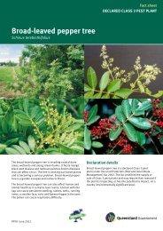Broad-leaved pepper tree - Department of Primary Industries