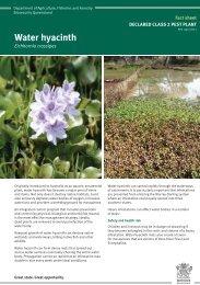 Water hyacinth - Department of Primary Industries