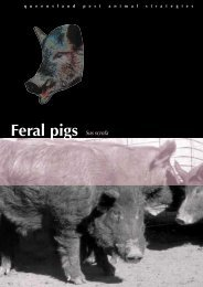 Feral pig strategy - Department of Primary Industries - Queensland ...