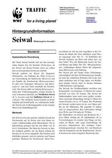 Seiwal - WWF Arten AZ - WWF Deutschland