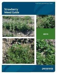 Guide to Weed Management in Strawberries - Perennia