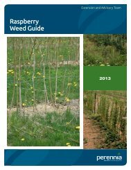 Guide to Weed Management in Raspberry - Perennia