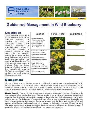 Goldenrod Management in Wild Blueberry - Perennia