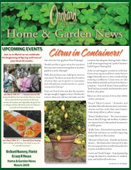 Citrus in Containers - Orchard Nursery