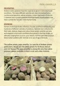 ANDEAN NATIVE POTATOES - GFU for Underutilized Species - Page 3