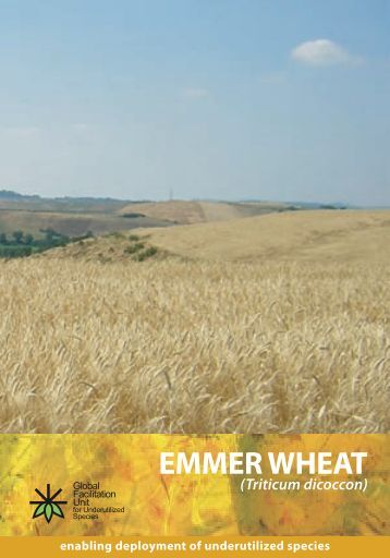 EMMER WHEAT - Crops for the Future