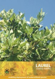 What is Laurel and where does it come from? - Crops for the Future