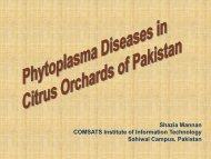 Phytoplasma diseases in citrus orchards in Pakistan. Shazia Mannan.