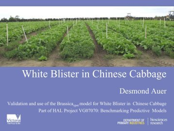 White Blister in Chinese Cabbage. Desmond Auer